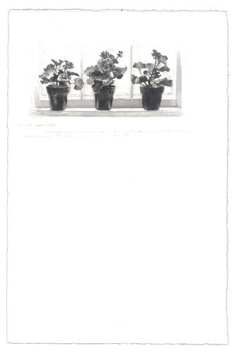 Three Geraniums: 17-18 April 1986 image