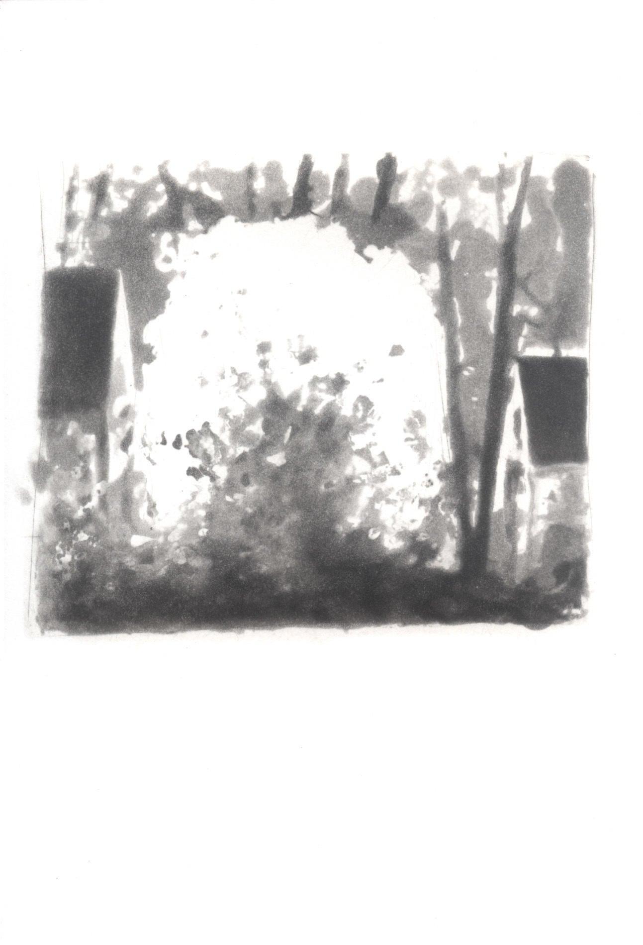 III. Star Magnolia image