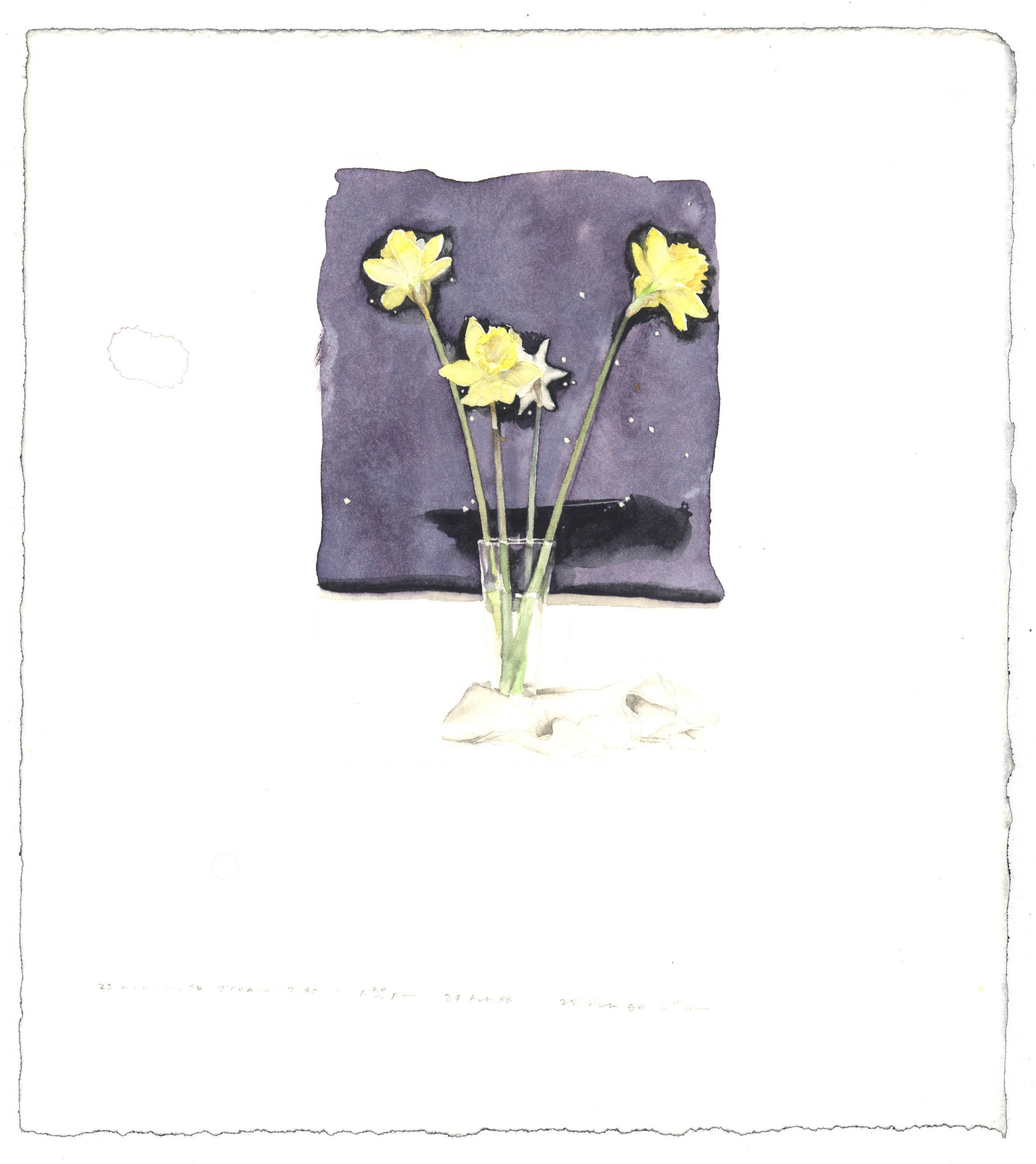 Daffodils with Star Map image