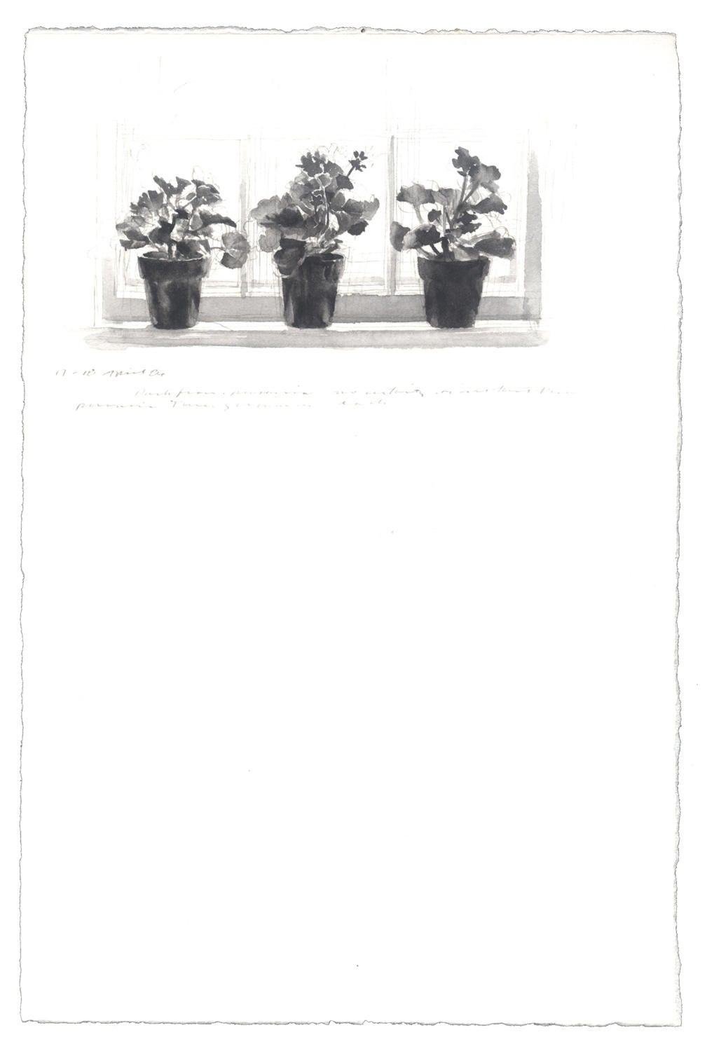 Three Geraniums: 17-18 April 1986 image