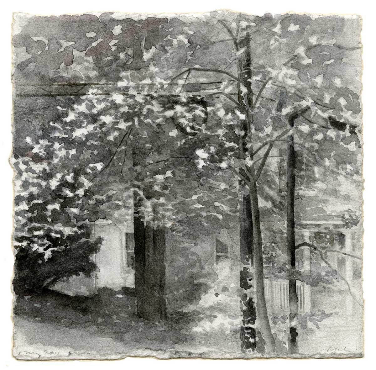 Dogwood Blossoms: 1 May 2011 image